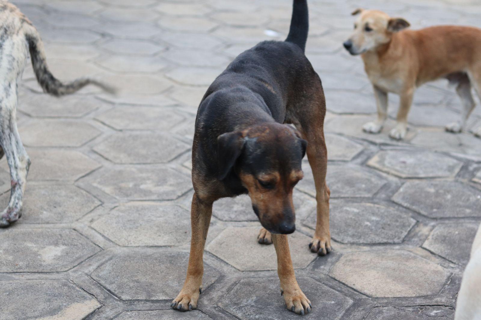 Animais em calçada do bairro Candeias em Vitória da Conquista - BA - Foto: Letícia Meira