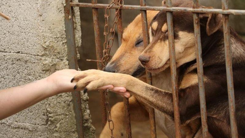 Reprodução: ONG Cão Sem Dono