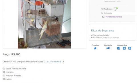 Os cuidados na hora de comprar animais vivos pela internet
