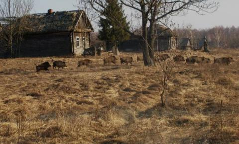 Natureza renova o ambiente histórico de Chernobyl
