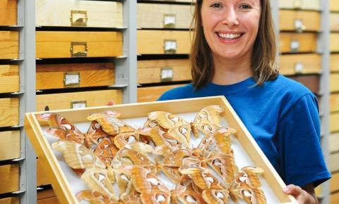 Pesquisadora brasileira ganha prêmio internacional em Entomologia