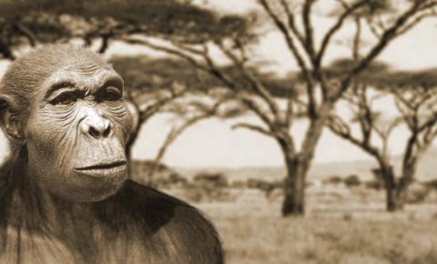 Estudo indica que o primeiro grupo de humanos a saírem da África foi há 2,5 milhões de anos atrás