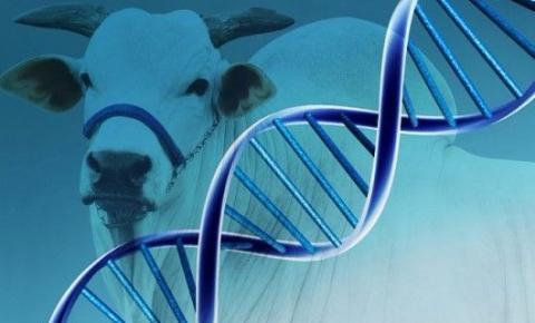 O futuro do melhoramento genético animal
