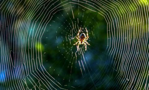 A poderosa seda das aranhas