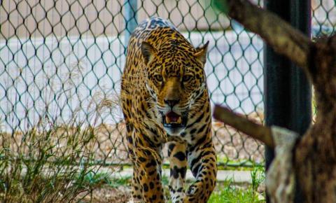 Zoológicos: conservação ou lucro exploratório?