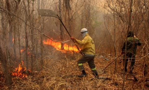 Pantanal: entenda as consequências das queimadas