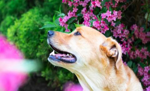 Saúde do pet: primavera exige cuidados extras com animais de estimação