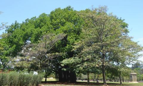Parque Ibirapuera reabre aos finais de semana e feriados