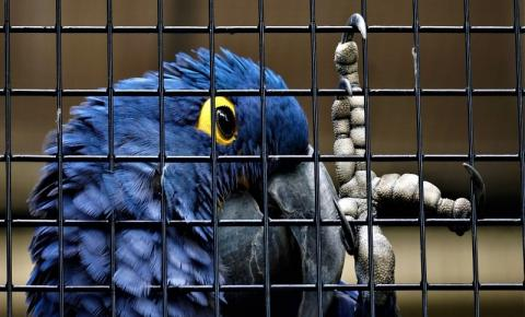 Venda de animais silvestres como pets pode incentivar tráfico?