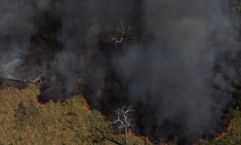Desmatamento é responsável pelo surgimento de novas epidemias