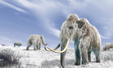 Fósseis de mamutes revelam o DNA mais antigo do planeta