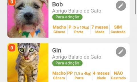 "Na.Mosca: Aplicativo no estilo ""Tinder pet"" une abrigos de animais de 5 estados brasileiros e facilita adoções na pandemia"