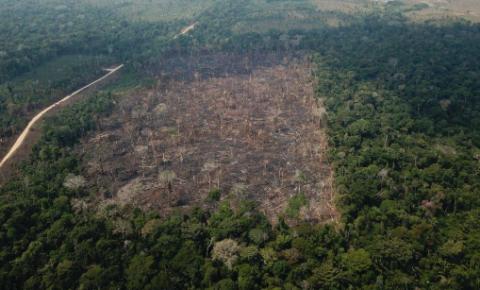 Meio Ambiente: preservação em último plano