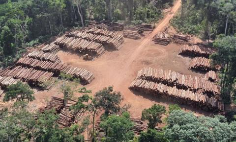 As consequências da derrubada ilegal de árvores na Amazônia