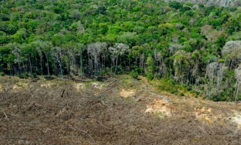 Desmatamento na Amazônia chegou ao maior índice em dez anos